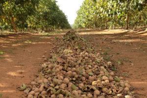 Как открыть бизнес по выращиванию фундука