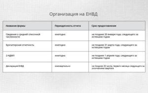 Отчетность для ИП на ЕНВД в 2021 году без работников