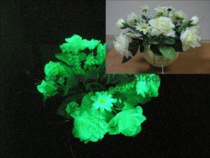 Бизнес идея: цветы, светящиеся в темноте