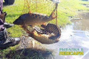 Организация рыбалки в платном, частном водоёме, как бизнес по продаже рыбы