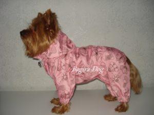 Бизнес-идея пошива одежды для собак