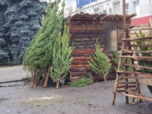 Ёлочные базары 2021, открываем новогодний бизнес на ёлках и соснах