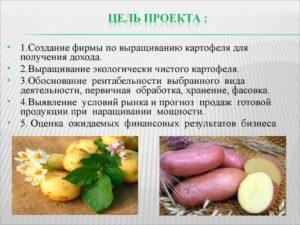 Бизнес план выращивания картофеля с расчетами