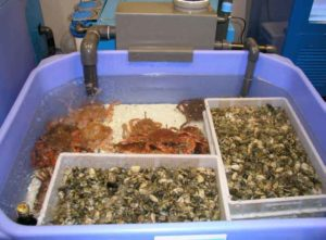 Бизнес-идея выращивания креветок в УЗВ