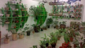 Бизнес-идея на выращивании комнатных растениях