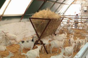 Бизнес план козьей фермы с расчетами