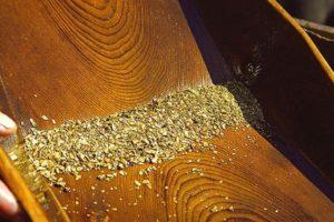 Добыча золота из песка в домашних условиях: себестоимость и риски
