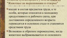 Счет 11 в бухгалтерском учете: Животные на выращивании и откорме