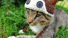 Шапочки для кошек