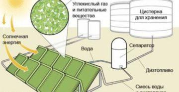 Новый способ добыть биотопливо